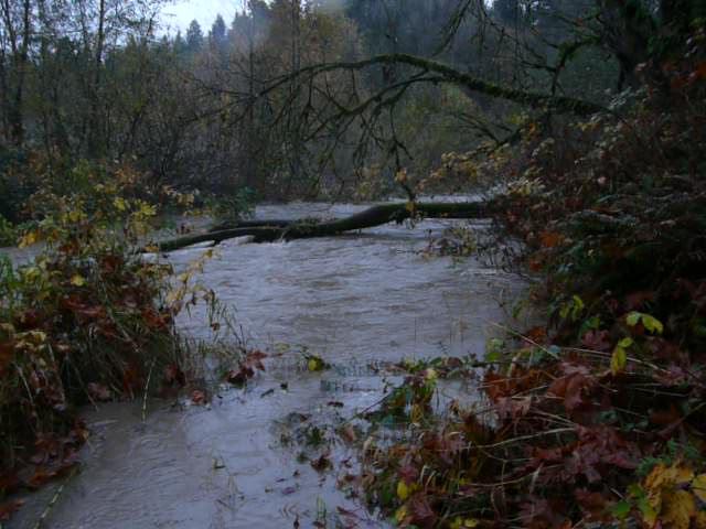 East of Island flood