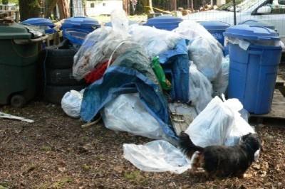 Garbagebefore